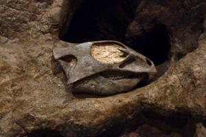 Link to Vertebrate Paleontology