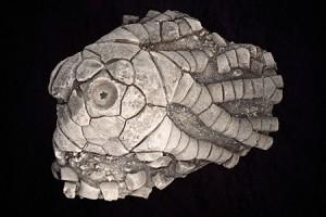 Link to Invertebrate Paleontology