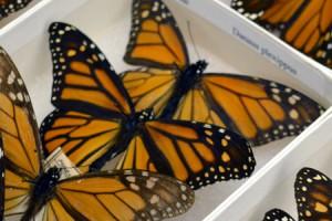 Link to Recent Invertebrates