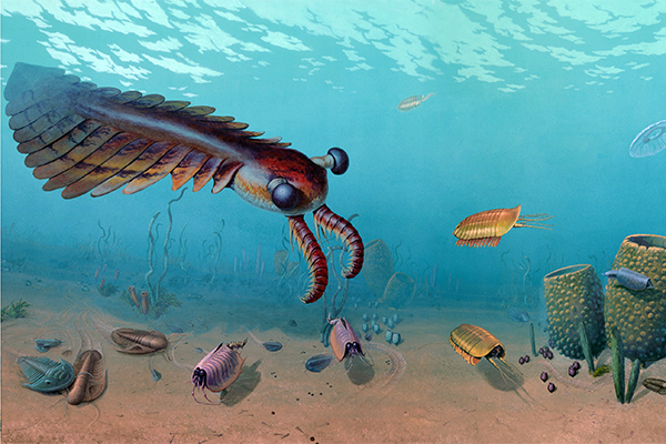 Link to Cambrian