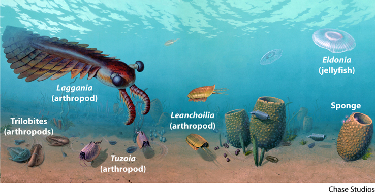 the cambrian explosion proof of id Cambrian rocks show large numbers of many different types animals, many with hard shells this important shift is often described as an explosion, but new evidence suggests that it may have been.