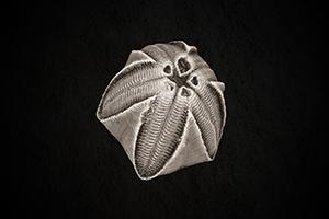 Link to Carboniferous