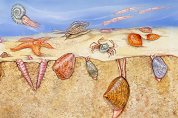 Link to Cretaceous