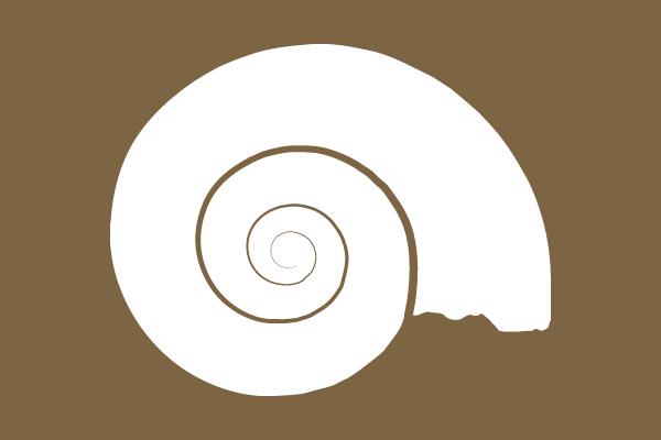 Link to Invertebrate Fossils