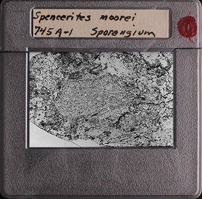 Photographic Slide with written on label of 745A-1 Sporangium of Spencerites moorei (Cridland 1960) Leisman and Stidd emend. 1967