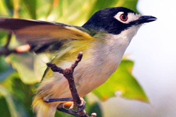 Link to Ornithology