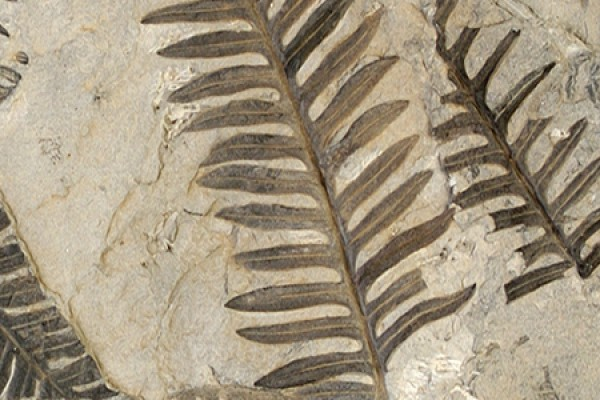 Link to Paleobotany