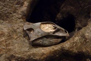 Link to Discovering Aquilops Americanus