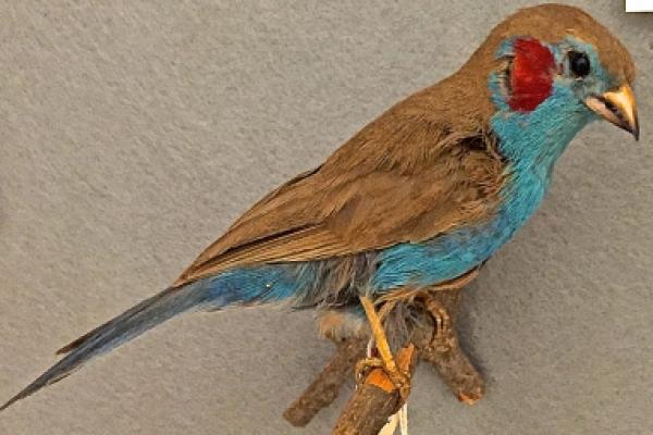 Bird Blog: Birds of Ethiopia