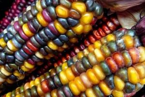 Link to Ethnology Blog