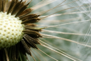Link to Flowering Plants