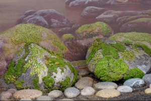 Link to Ordovician