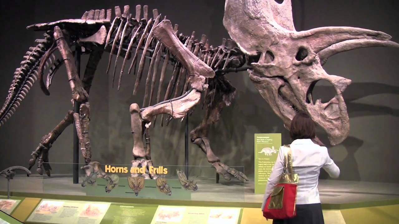 Link to Vertebrate Paleontology Research