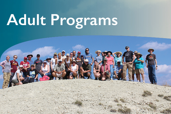 Link to Adult Programs